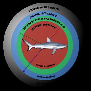 sphere-requin_0