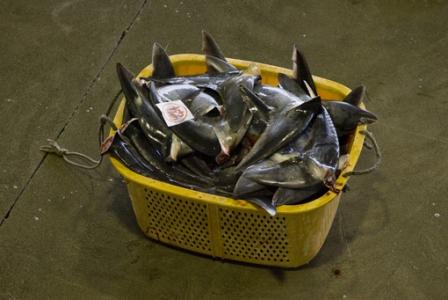 industrie-du-requin-19