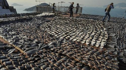 452090-shark-fins
