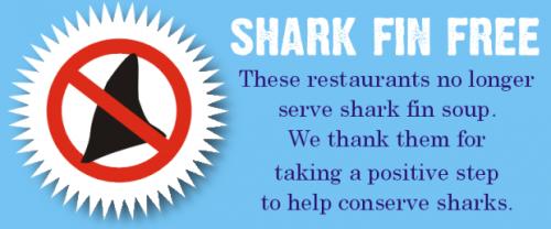 shark-fin-free