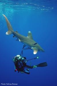 Un photographe et un requin longimane