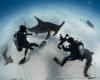 shark requin marteau hammer fish eye