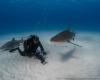 shark requin sand tiger beach