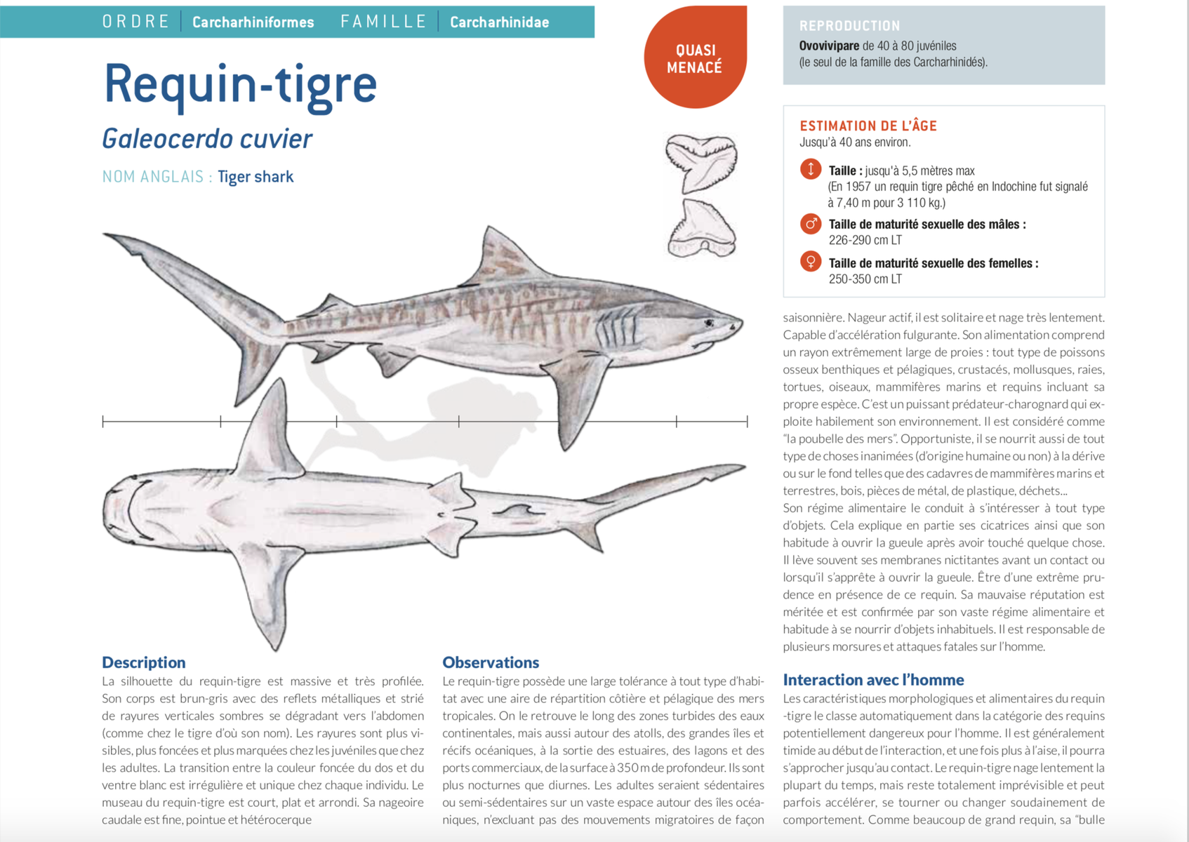 fiche requin tigre tiger shark