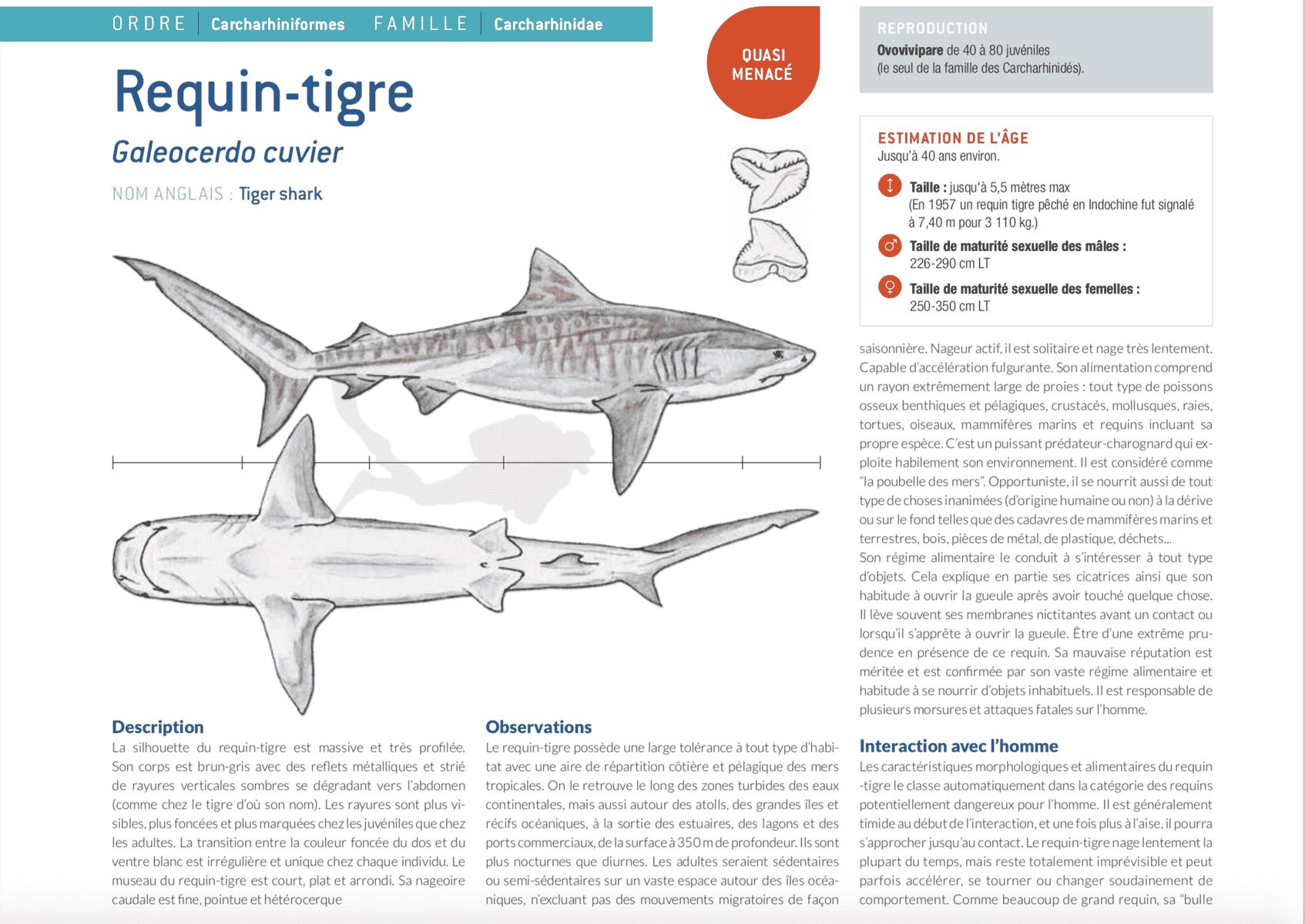 fiche requin tigre tiger shark