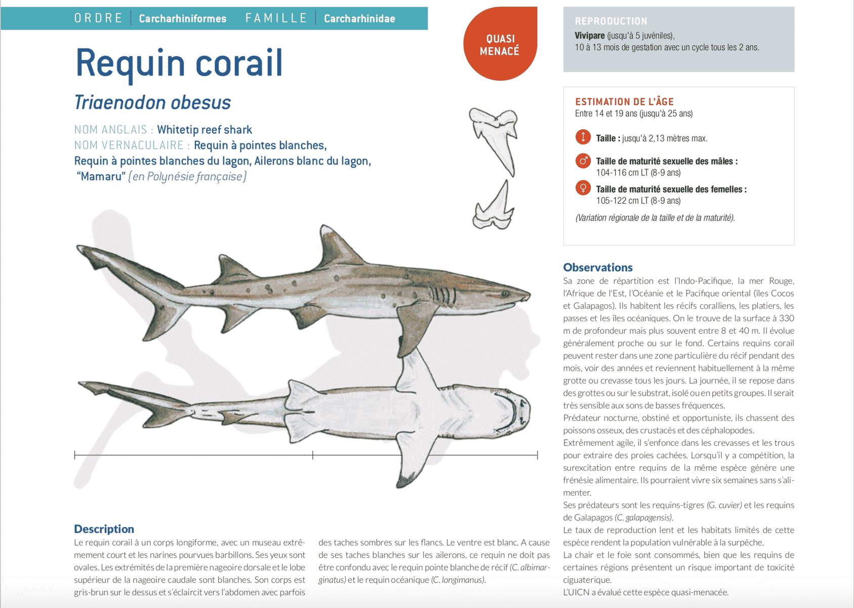 fiche requin corail triaenodon obesus