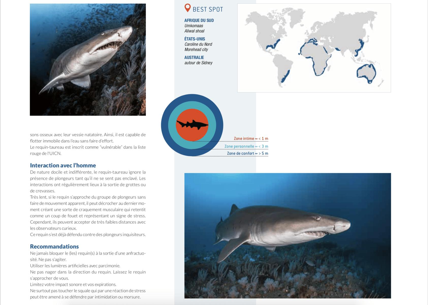 fiche requin taureau best spot