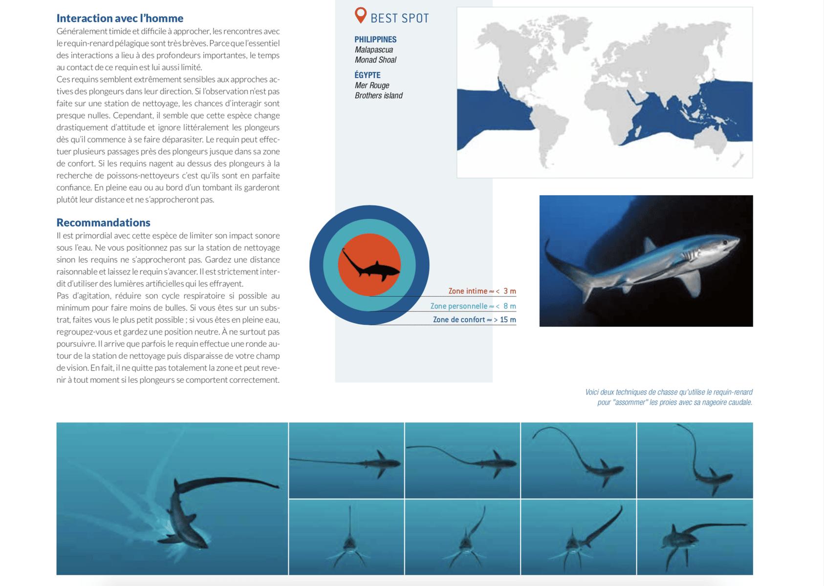fiche requin renard best spot