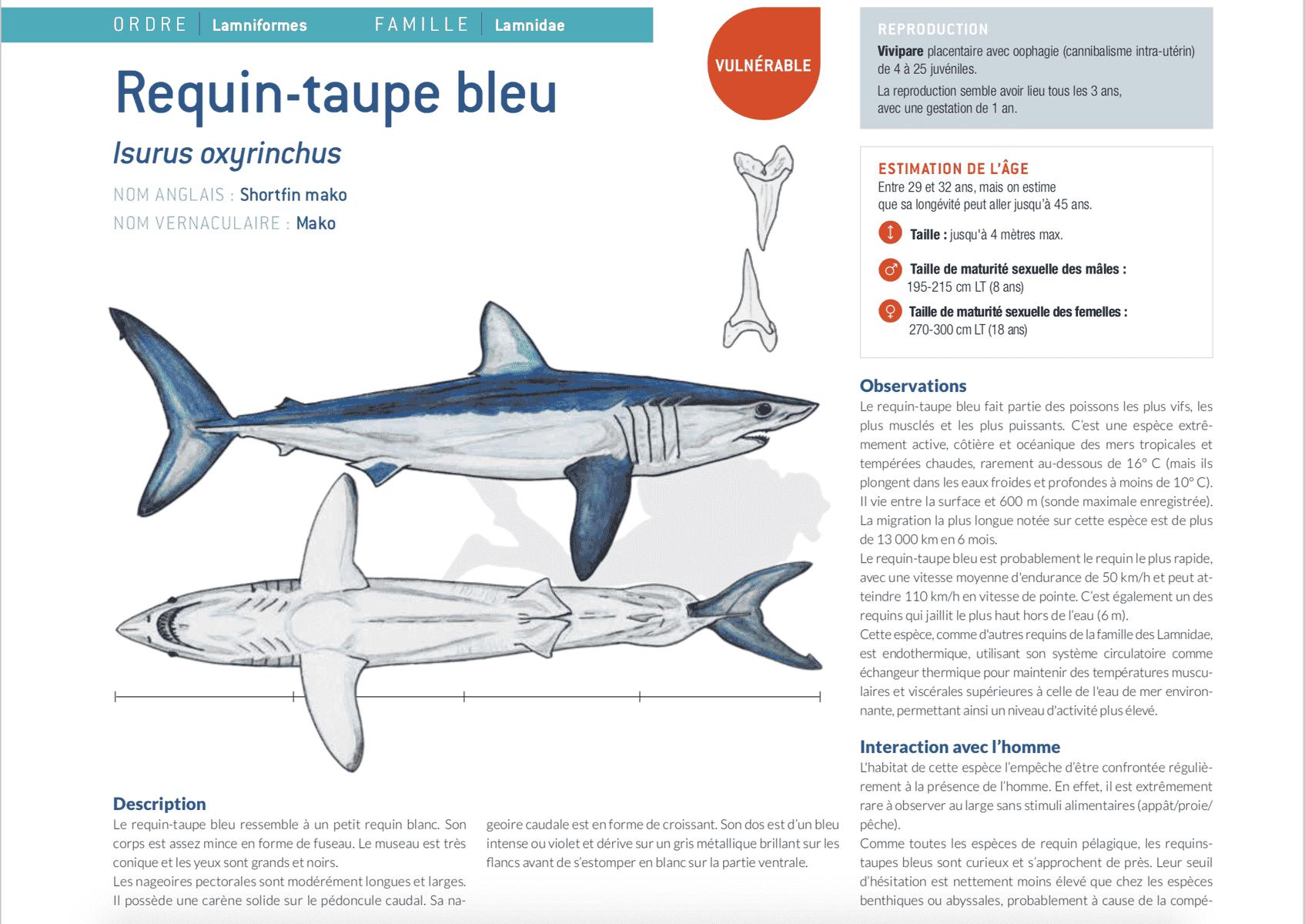 fiche requin taupe isurus oxyrinchus