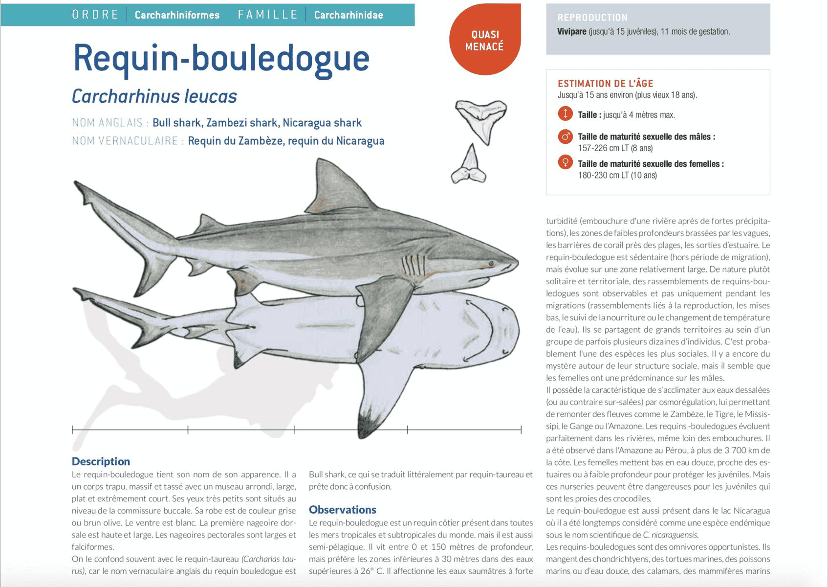 fiche requin bouledogue carcharhinus leucas