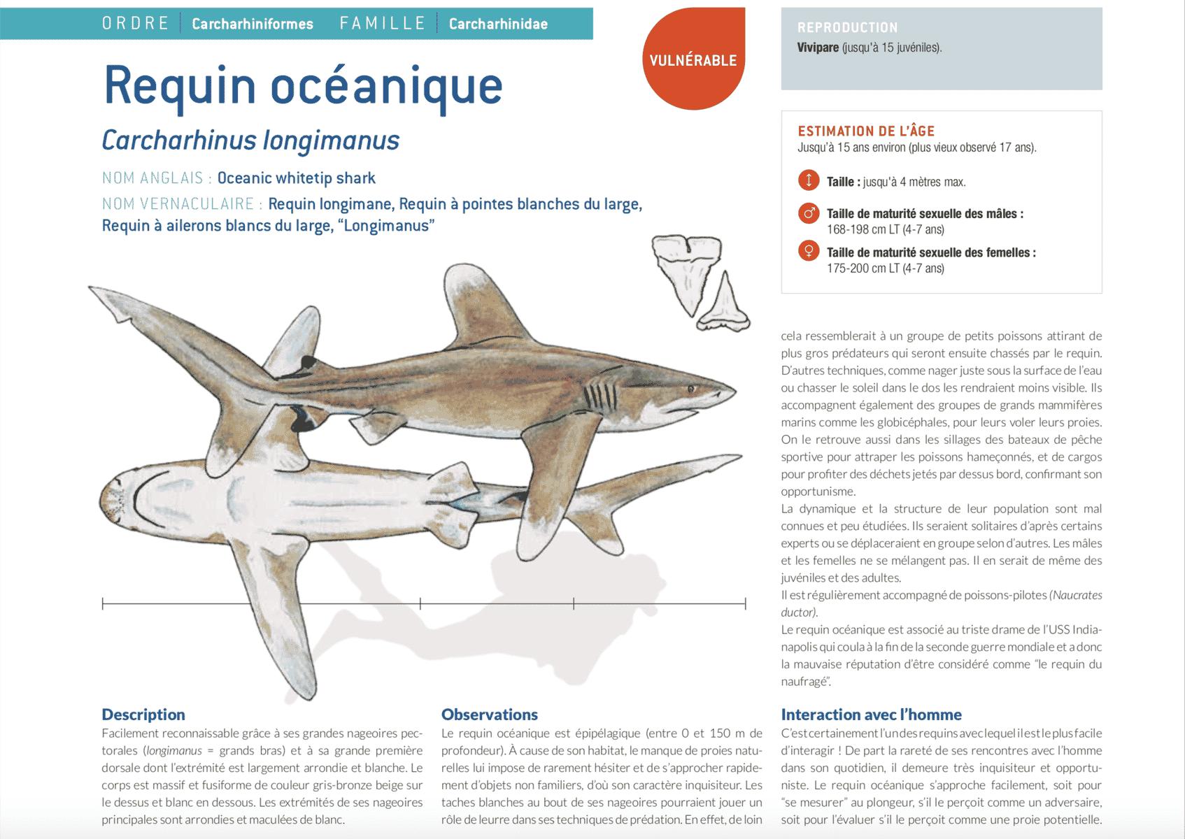 fiche requin océanique longimanus