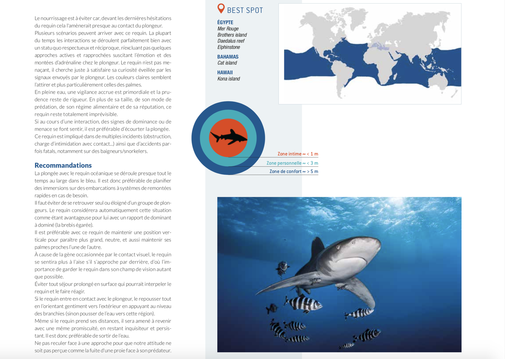 requin océanique best spot