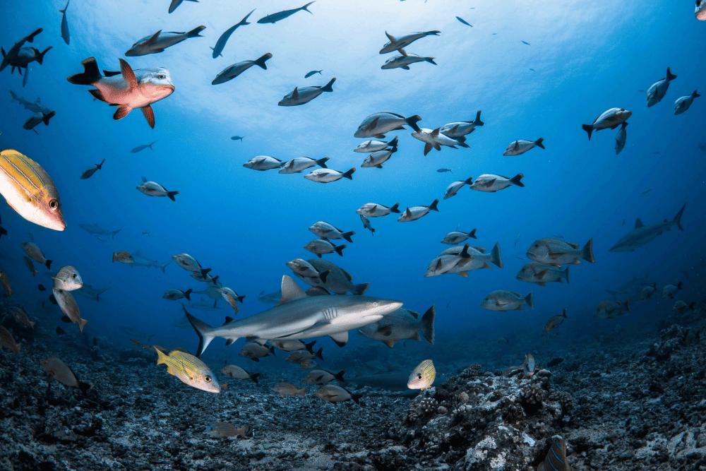 requin corail panorama