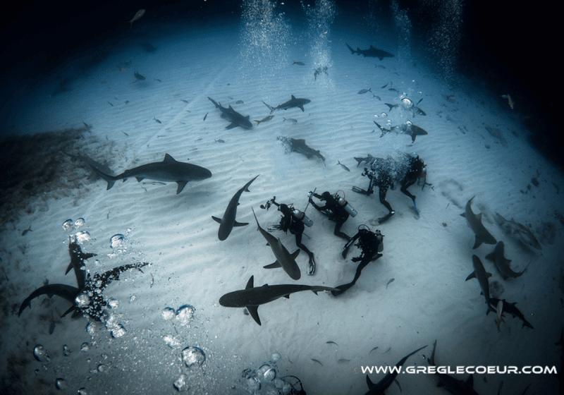 panorama requins plongeurs
