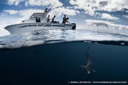 shark explorer boat