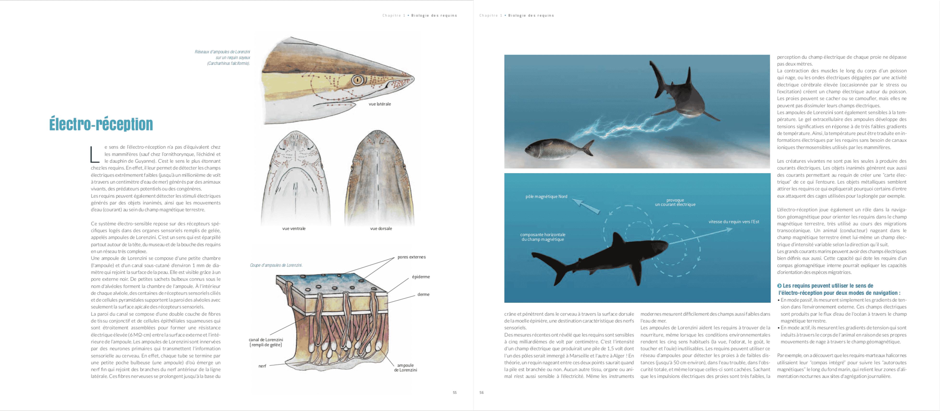 boutique livre requin steven surina